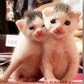 息子のリュックに入って我が家にやって来た!生まれたばかりの子猫兄弟