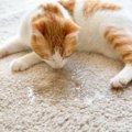 猫のおしっこの色で健康チェック!濃い黄色や赤い尿は病気?