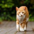 猫の撃退方法 外飼いや野良猫対策
