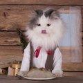 猫は芋を食べても大丈夫?食べていい物・悪い物