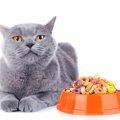 猫の貧血に効く食事や食べ物5選