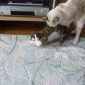 【つられ笑い注意!】ひたすら笑い続ける猫にドン引く猫