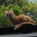 ワナにかかって大ケガをした養豚場の猫を保護。飼い猫への覚悟