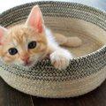 猫の年齢の見分け方はある?5つのポイント