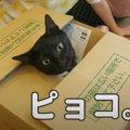 やっぱりダンボールがお好き♡無邪気に遊ぶ猫ちゃん!