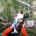 木の枝に引っかかった猫…悲痛な鳴き声に救助が出動!