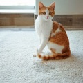 猫がトイレじゃない所で粗相をする4つの心理