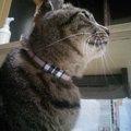 作り方はたったの3ステップ♪猫の首輪を手作りしてみました