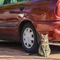 猫をタクシーに乗せるときに気を付ける6つのこと