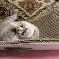 猫にとっての『毎日の生きがい』4つ