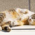 猫の柄の豊富な種類とそれが生まれた理由