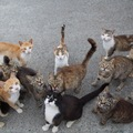 さくら猫を知っていますか?