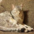 猫のせいで寝不足…夜寝てくれるようにする5つの方法