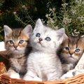 猫メロメロ芸人(アメトーーク)出演者やエピソード