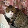 前足を引きずった猫のリンリン…保護を受け危機から脱出!