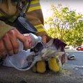 火災現場で倒れていた子猫。消防隊員の優しさで一命を取り留める