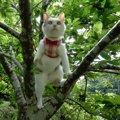 ワイルドな三毛猫姉さん、木登りだってこの通り