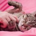 猫にできものが出来た際に注意すべき3種類のガン