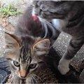 ある日突然、愛猫が子猫を連れてきた!ホームレス猫を助けた猫もかつ…