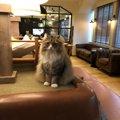 猫カフェ「モカラウンジ 池袋東口店」に行って来ました!