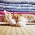 猫が畳で爪とぎ、吐く、粗相をした時の対処法と予防策