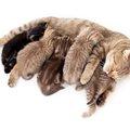 猫の育児放棄の原因とその対策について