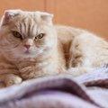 猫の尿路結石とは?症状と治療法から予防法まで