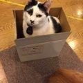 キャットストレススコアで判明。箱があるお部屋にいると猫はストレス…