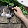 野良猫が人になつく方法と注意点