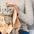水を使わない秘策も!『お風呂嫌いな猫』をキレイにする5つの方法