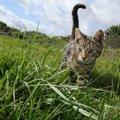 猫が帰ってくるおまじないを試して迷子ペットをお家に導こう!