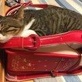 猫のベッドを快適にする手軽な方法5つ