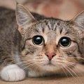 猫が地震を怖がる理由と対処法