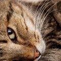 猫が『上目遣い』をする心理6つ