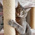 猫の『爪とぎ』対策5選!猫の習性を知って大切な家具を守ろう!