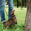 猫と散歩するための10のステップ!必要なものや注意点とは