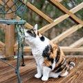 【新型コロナ】マーキングしてしまう愛猫…預ける際にできることは?
