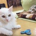 猫の足ではこう回す!気になる話題のハンドスピナー!