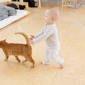 ゆっくり歩いている時の猫の心理