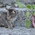 猫は大根を食べても大丈夫?与える時の注意点と与えてはいけない物