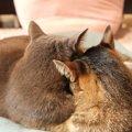 猫のカップルがラブラブ過ぎる!いちゃいちゃしてる様子を見てみよう