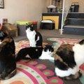 富山の猫カフェおすすめ5店!子供連れ向けから譲渡型まで!