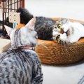 遊びたい子猫ちゃんと迷惑そうな猫さんがなんだか可愛い♡