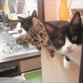 池袋の猫カフェ!おすすめなお店5選