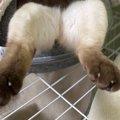猫が…突き刺さってる!?『頭隠して尻隠さず』スタイルで眠る猫さんが…
