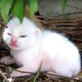 「ママ早く迎えに来て!」不安な表情にキュン!野良猫親子の引っ越し