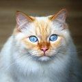 猫の目の色の種類まとめ