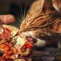 ピザキャットは猫のピザ屋さん!キャンペーンの内容や今までの活動