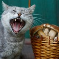 猫はしいたけを食べれる?効果や与え方について