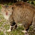 怒った猫の声や耳の形など5つの体の変化